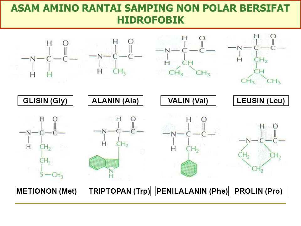 ASAM AMINO RANTAI SAMPING NON POLAR BERSIFAT HIDROFOBIK