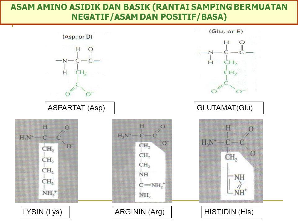 ASAM AMINO ASIDIK DAN BASIK (RANTAI SAMPING BERMUATAN NEGATIF/ASAM DAN POSITIF/BASA)