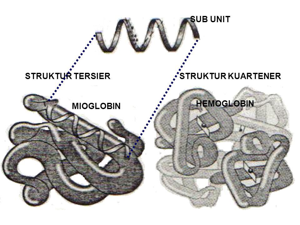 SUB UNIT STRUKTUR TERSIER STRUKTUR KUARTENER HEMOGLOBIN MIOGLOBIN