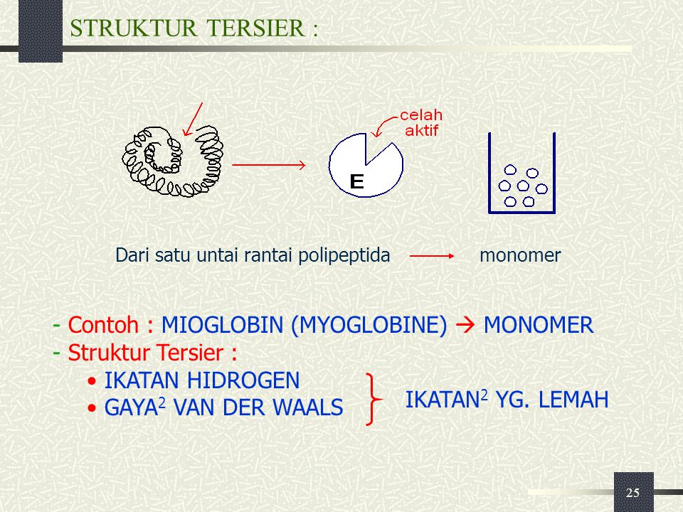 STRUKTUR TERSIER : Contoh : MIOGLOBIN (MYOGLOBINE)  MONOMER