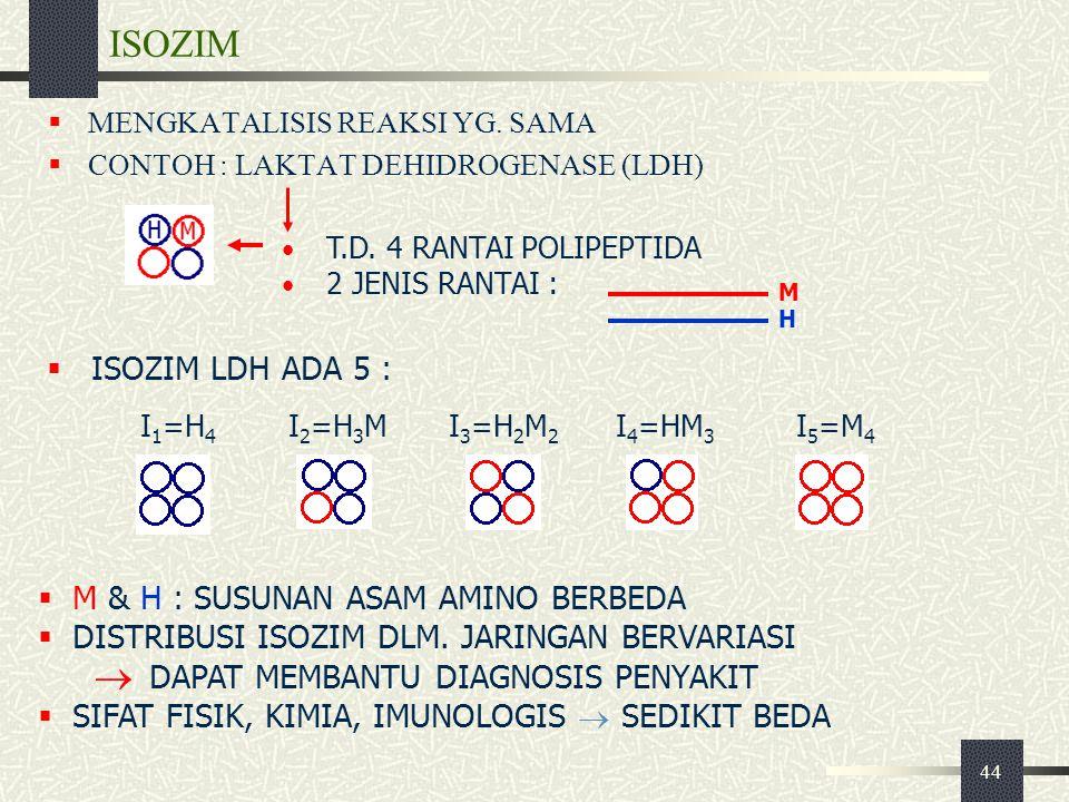 ISOZIM ISOZIM LDH ADA 5 : M & H : SUSUNAN ASAM AMINO BERBEDA