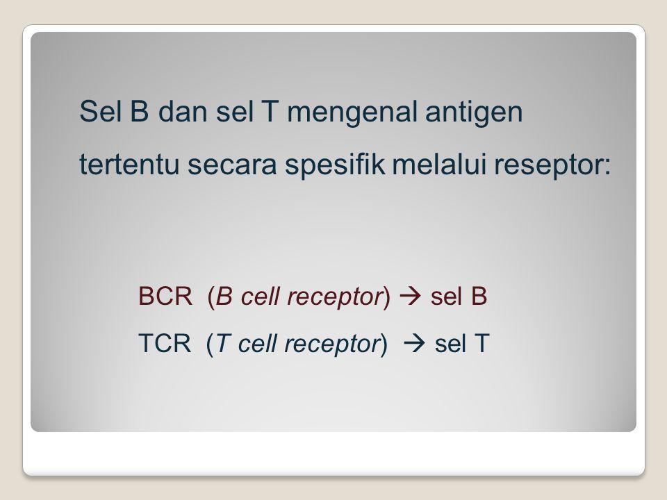 Sel B dan sel T mengenal antigen tertentu secara spesifik melalui reseptor: