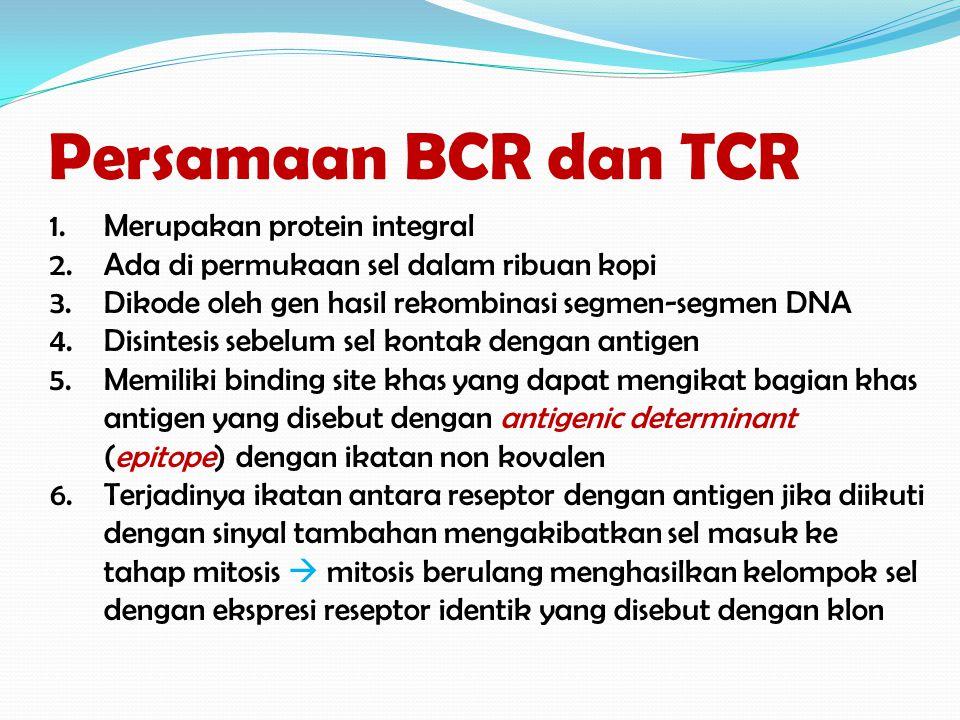 Persamaan BCR dan TCR Merupakan protein integral