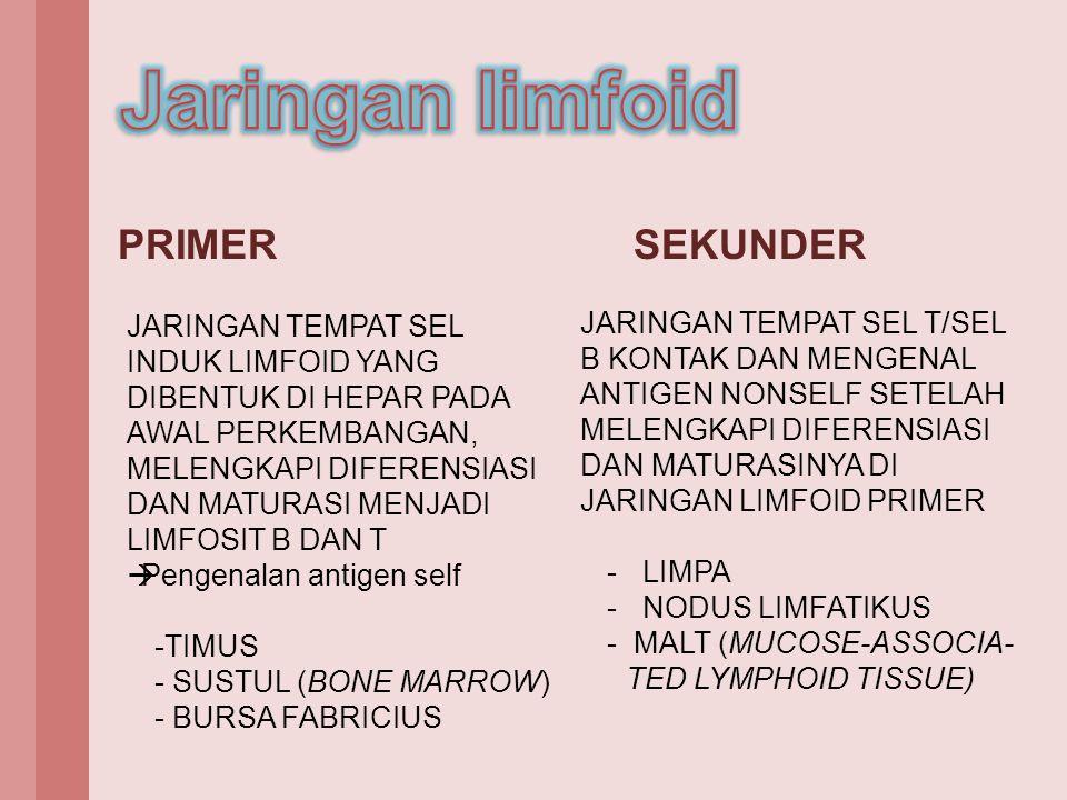 Jaringan limfoid PRIMER SEKUNDER