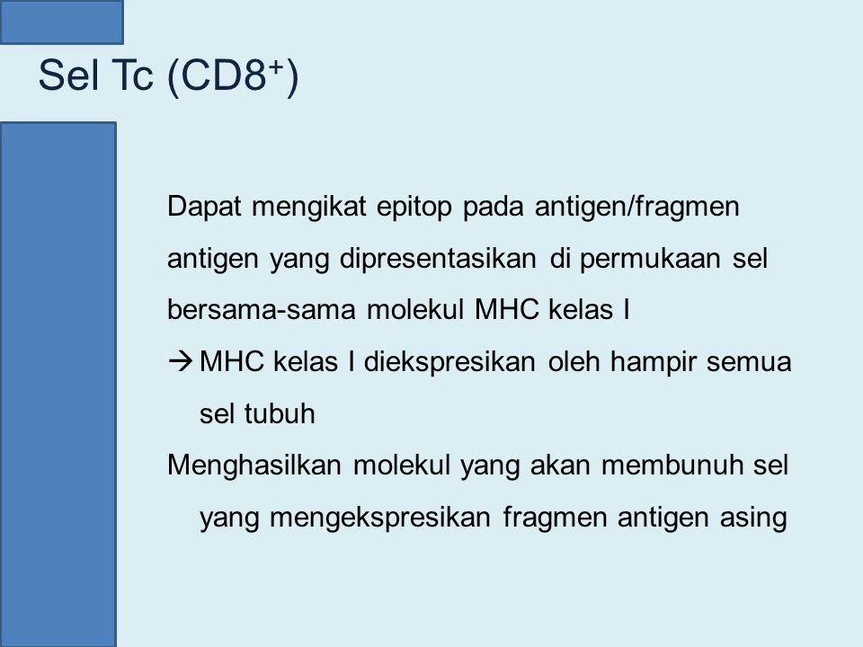 Sel Tc (CD8+) Dapat mengikat epitop pada antigen/fragmen antigen yang dipresentasikan di permukaan sel bersama-sama molekul MHC kelas I.