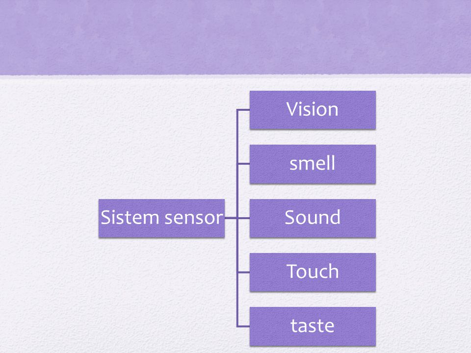 Sistem sensor Vision smell Sound Touch taste