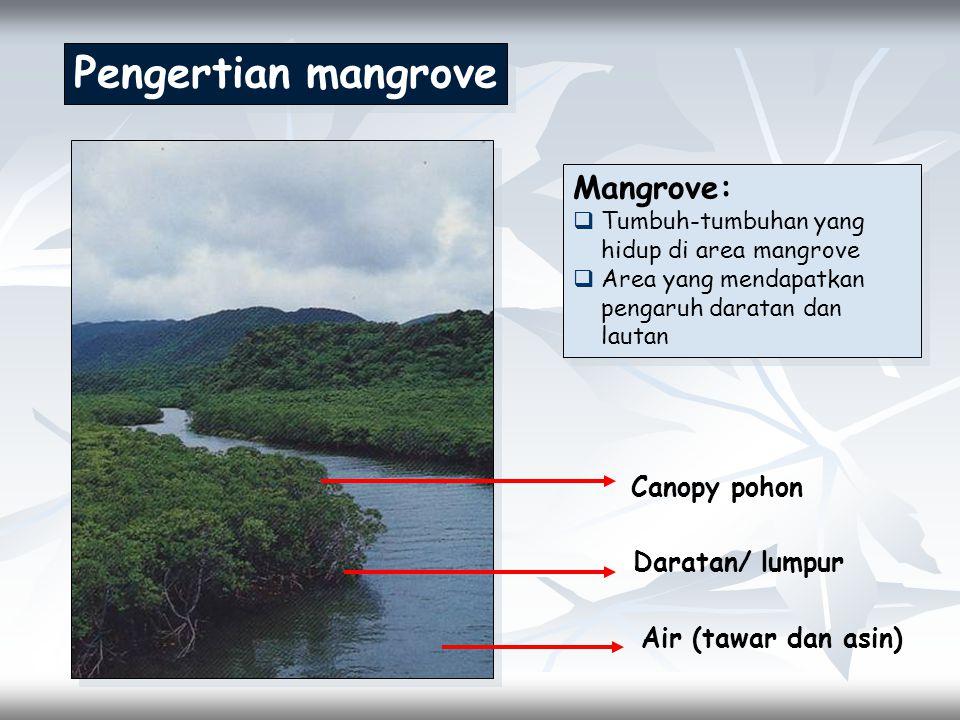 Pengertian mangrove Mangrove: Canopy pohon Daratan/ lumpur