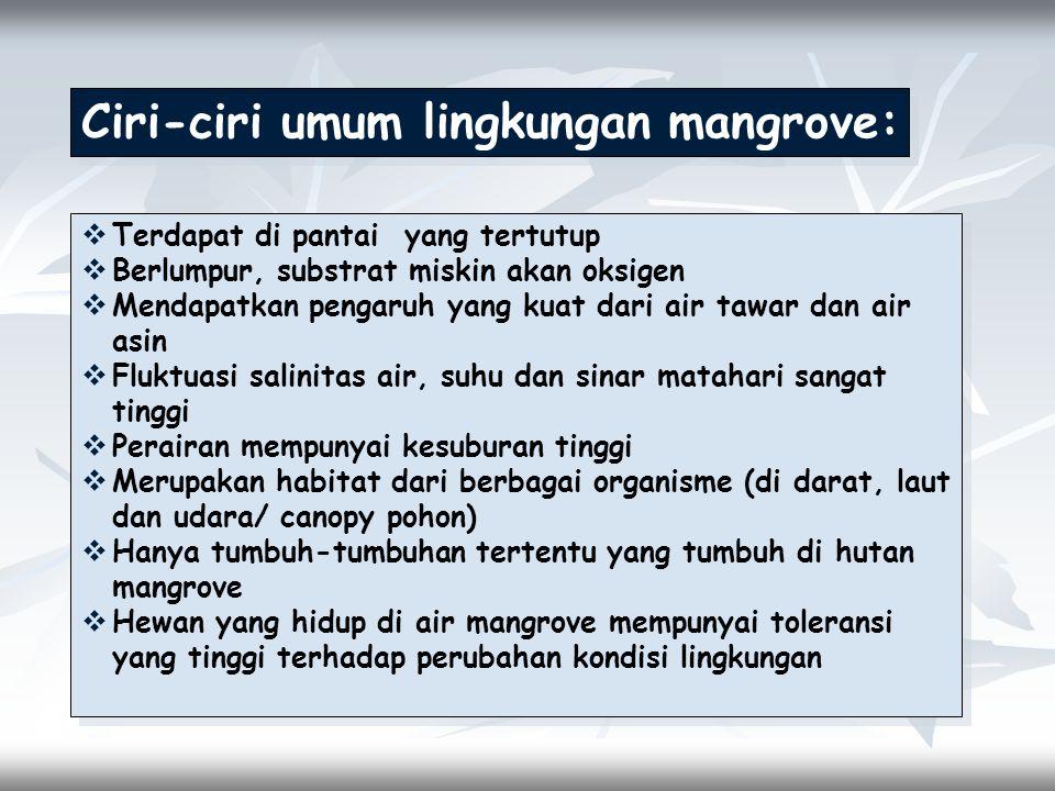 Ciri-ciri umum lingkungan mangrove:
