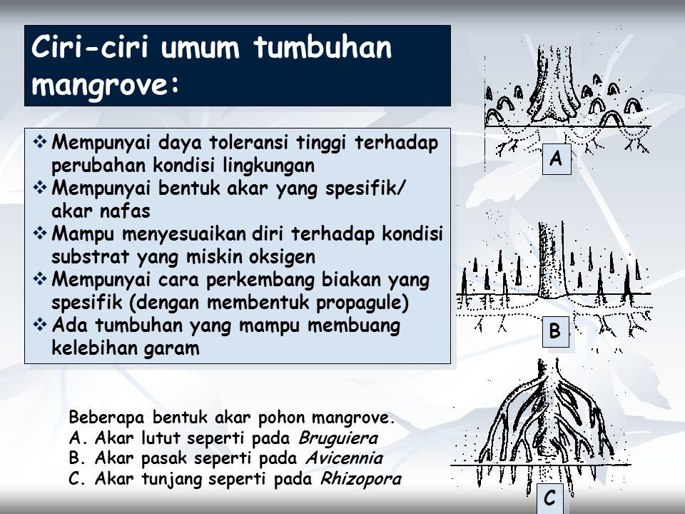 Ciri-ciri umum tumbuhan mangrove: