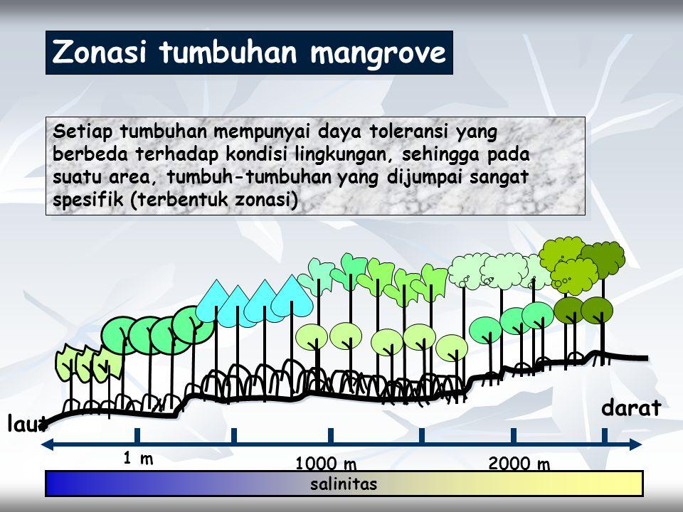 Zonasi tumbuhan mangrove