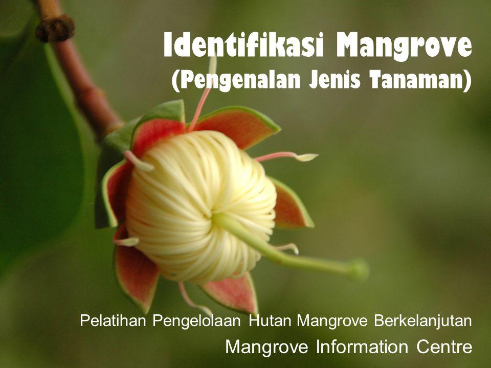 Identifikasi Mangrove (Pengenalan Jenis Tanaman)