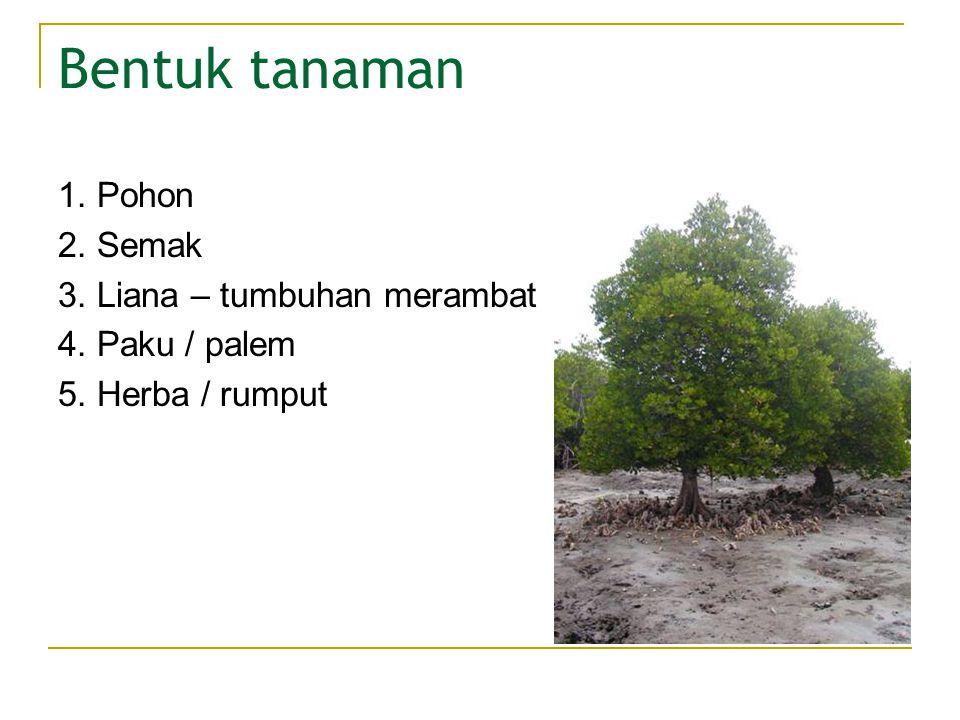 Bentuk tanaman 1. Pohon 2. Semak 3. Liana – tumbuhan merambat