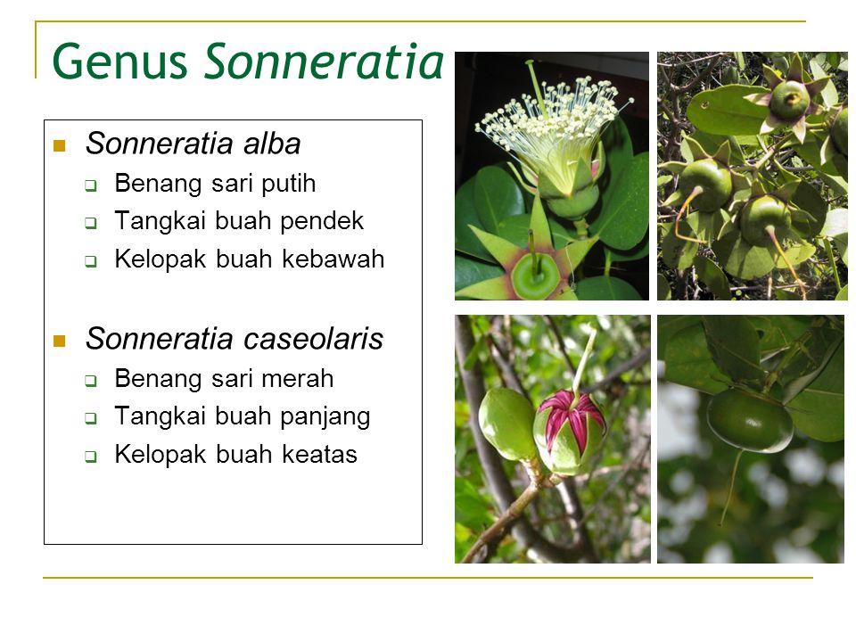 Genus Sonneratia Sonneratia alba Sonneratia caseolaris