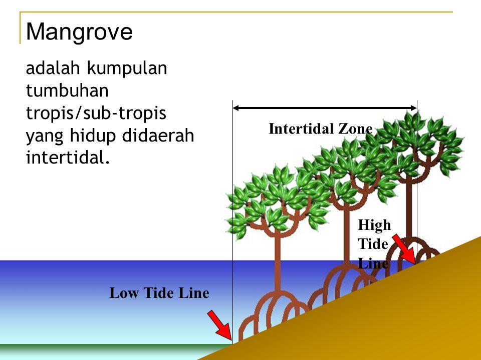 Mangrove adalah kumpulan tumbuhan tropis/sub-tropis yang hidup didaerah intertidal. Intertidal Zone.