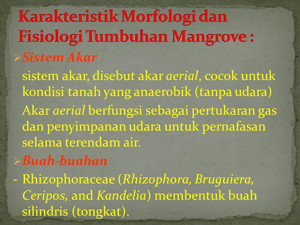 Karakteristik Morfologi dan Fisiologi Tumbuhan Mangrove :