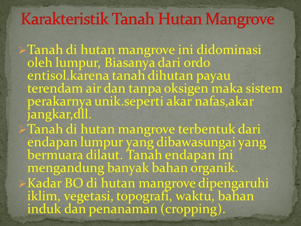 Karakteristik Tanah Hutan Mangrove