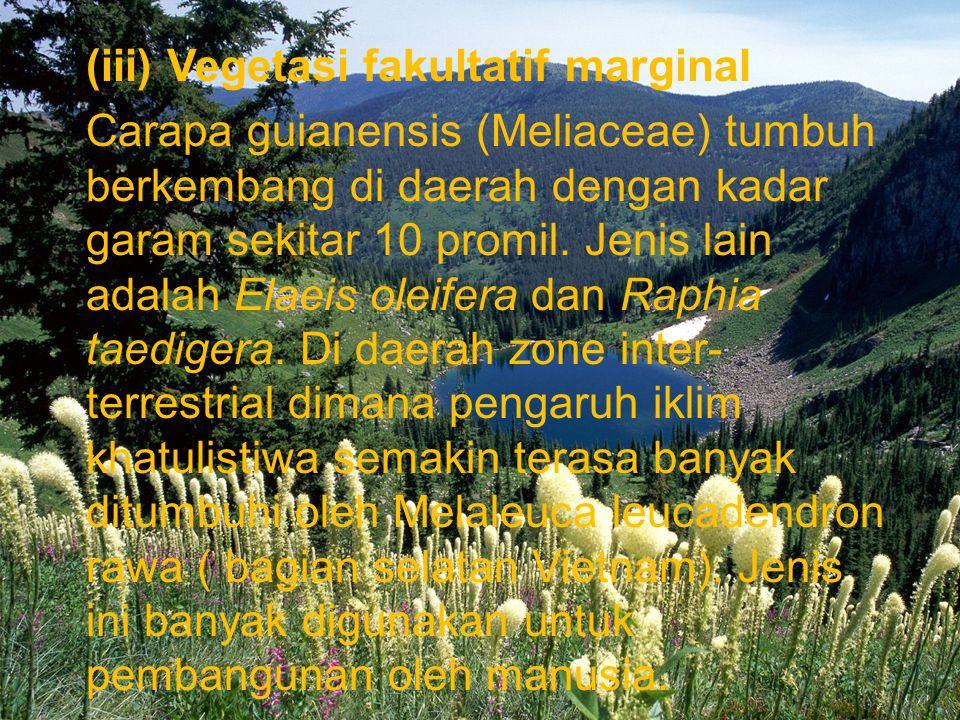 (iii) Vegetasi fakultatif marginal Carapa guianensis (Meliaceae) tumbuh berkembang di daerah dengan kadar garam sekitar 10 promil.