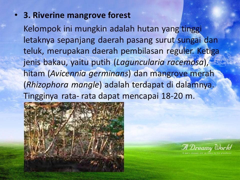 3. Riverine mangrove forest