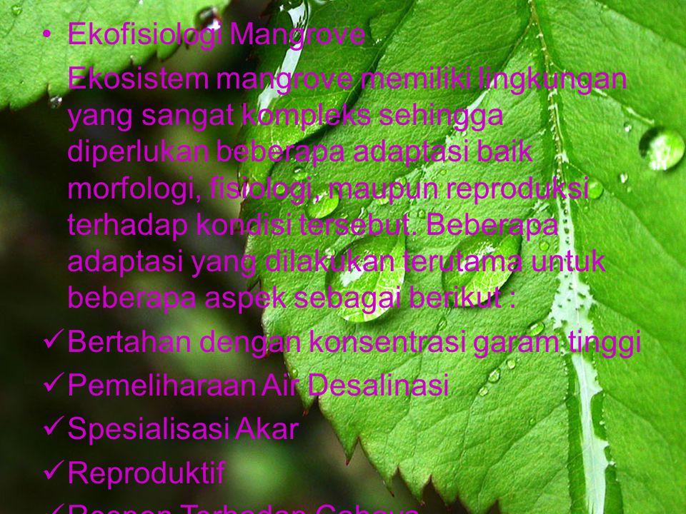 Ekofisiologi Mangrove