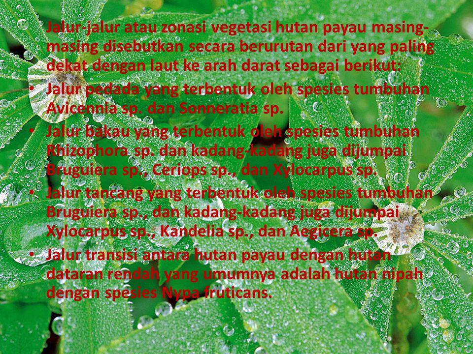Jalur-jalur atau zonasi vegetasi hutan payau masing-masing disebutkan secara berurutan dari yang paling dekat dengan laut ke arah darat sebagai berikut: