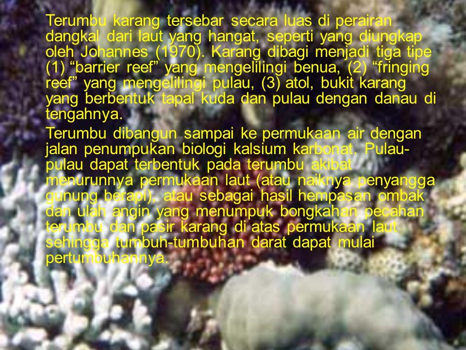 Terumbu karang tersebar secara luas di perairan dangkal dari laut yang hangat, seperti yang diungkap oleh Johannes (1970).