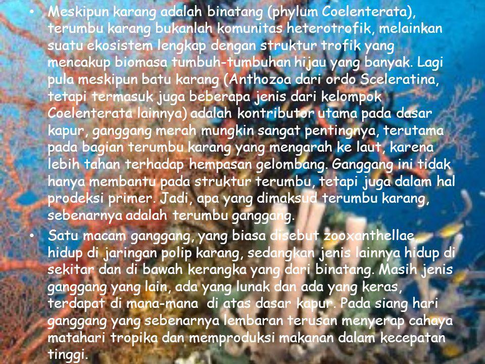 Meskipun karang adalah binatang (phylum Coelenterata), terumbu karang bukanlah komunitas heterotrofik, melainkan suatu ekosistem lengkap dengan struktur trofik yang mencakup biomasa tumbuh-tumbuhan hijau yang banyak. Lagi pula meskipun batu karang (Anthozoa dari ordo Sceleratina, tetapi termasuk juga beberapa jenis dari kelompok Coelenterata lainnya) adalah kontributor utama pada dasar kapur, ganggang merah mungkin sangat pentingnya, terutama pada bagian terumbu karang yang mengarah ke laut, karena lebih tahan terhadap hempasan gelombang. Ganggang ini tidak hanya membantu pada struktur terumbu, tetapi juga dalam hal prodeksi primer. Jadi, apa yang dimaksud terumbu karang, sebenarnya adalah terumbu ganggang.