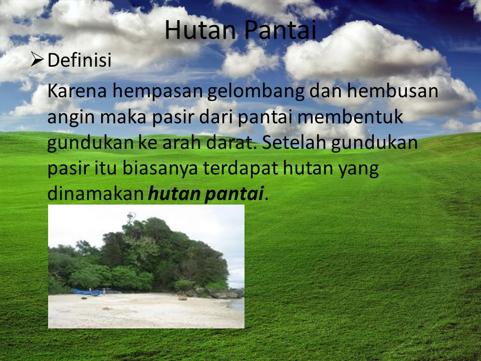 Hutan Pantai Definisi.