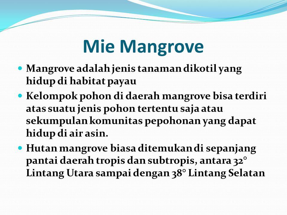 Mie Mangrove Mangrove adalah jenis tanaman dikotil yang hidup di habitat payau.