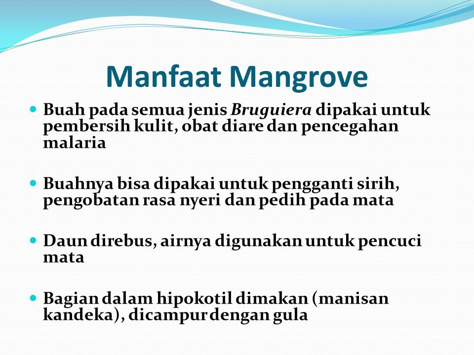 Manfaat Mangrove Buah pada semua jenis Bruguiera dipakai untuk pembersih kulit, obat diare dan pencegahan malaria.