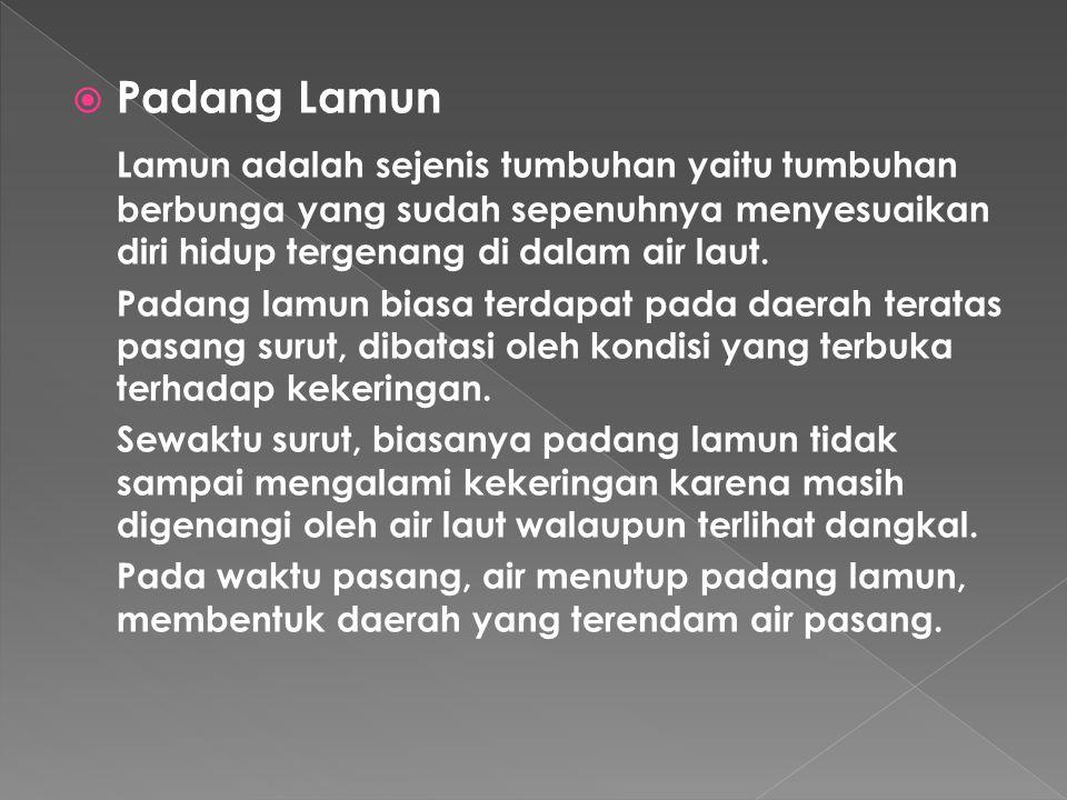 Padang Lamun Lamun adalah sejenis tumbuhan yaitu tumbuhan berbunga yang sudah sepenuhnya menyesuaikan diri hidup tergenang di dalam air laut.