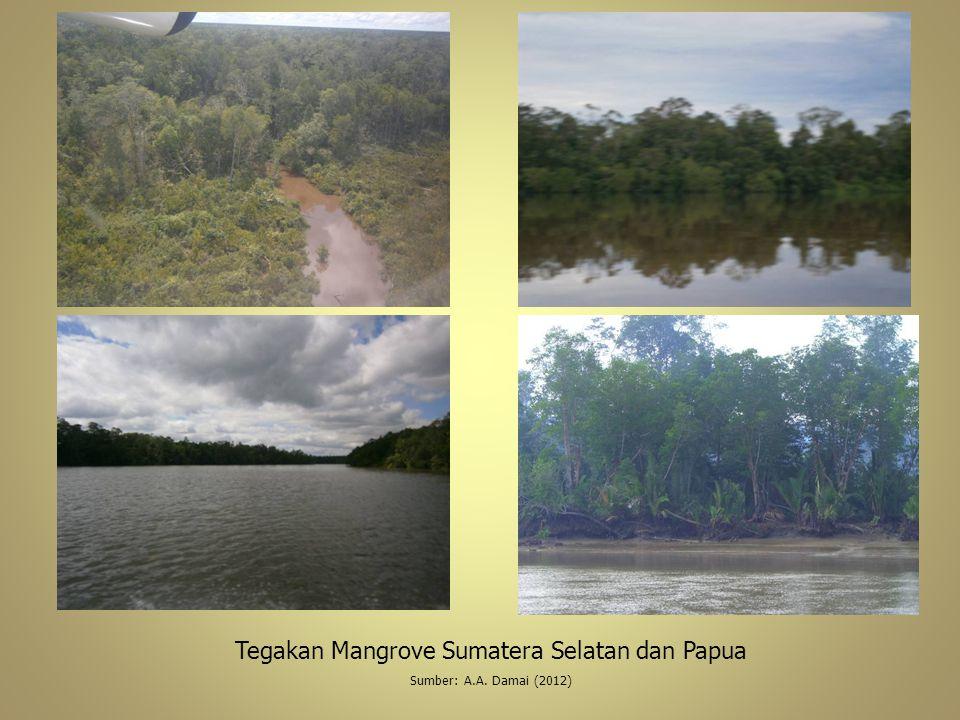 Tegakan Mangrove Sumatera Selatan dan Papua