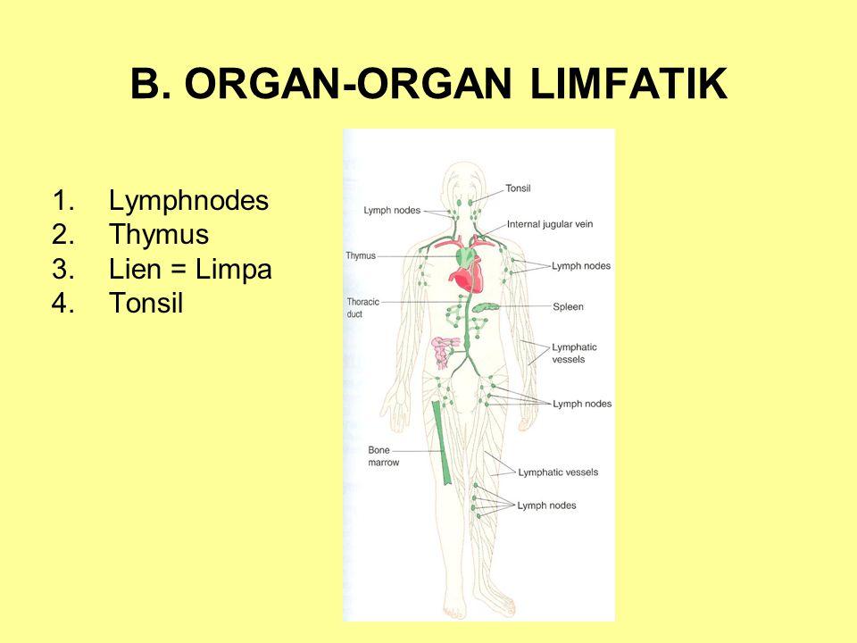 B. ORGAN-ORGAN LIMFATIK