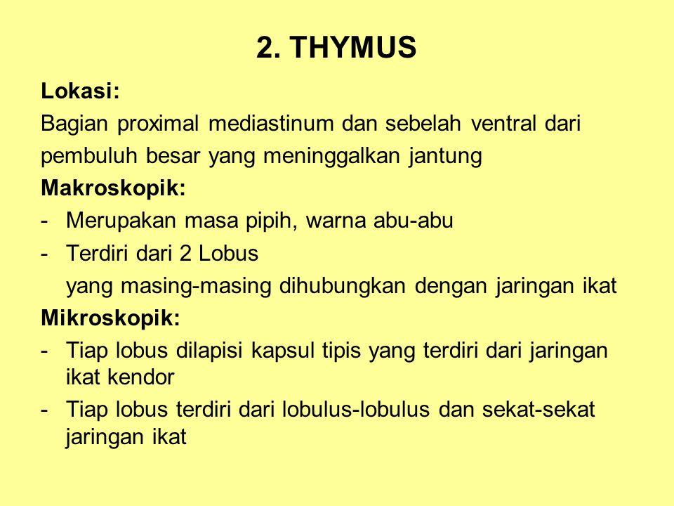 2. THYMUS Lokasi: Bagian proximal mediastinum dan sebelah ventral dari