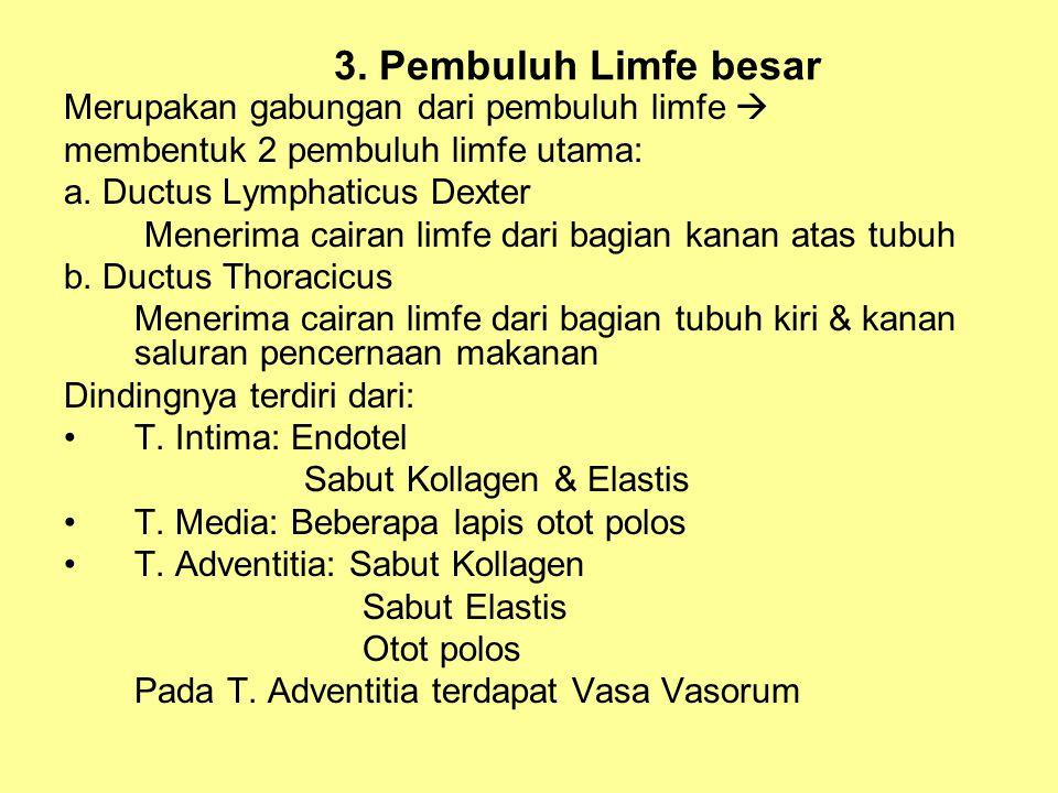 3. Pembuluh Limfe besar Merupakan gabungan dari pembuluh limfe 