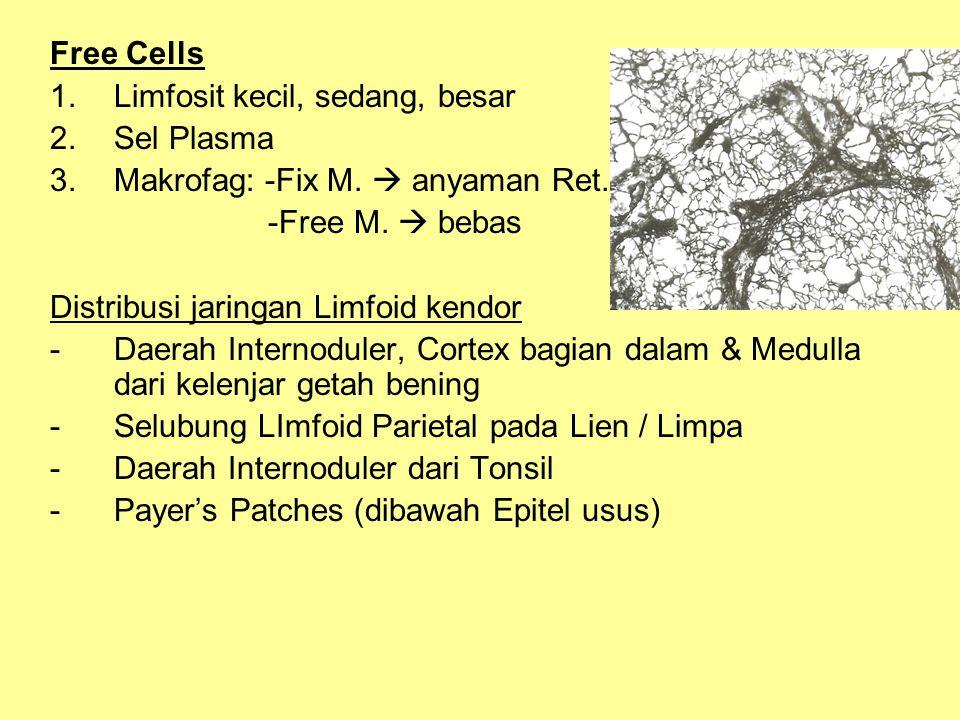 Free Cells Limfosit kecil, sedang, besar. Sel Plasma. Makrofag: -Fix M.  anyaman Ret. -Free M.  bebas.