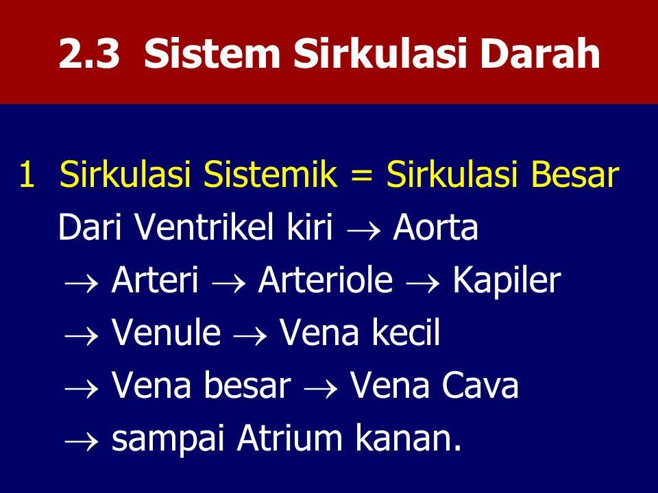 2.3 Sistem Sirkulasi Darah