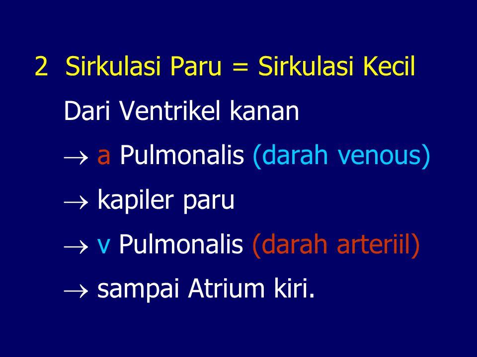 2 Sirkulasi Paru = Sirkulasi Kecil