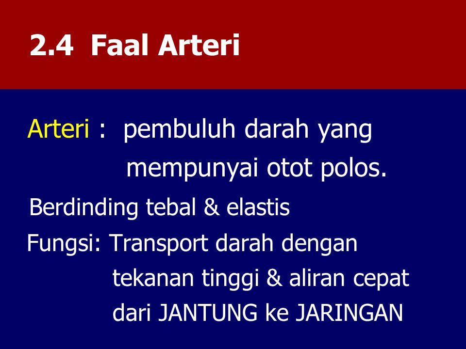 2.4 Faal Arteri mempunyai otot polos. Berdinding tebal & elastis