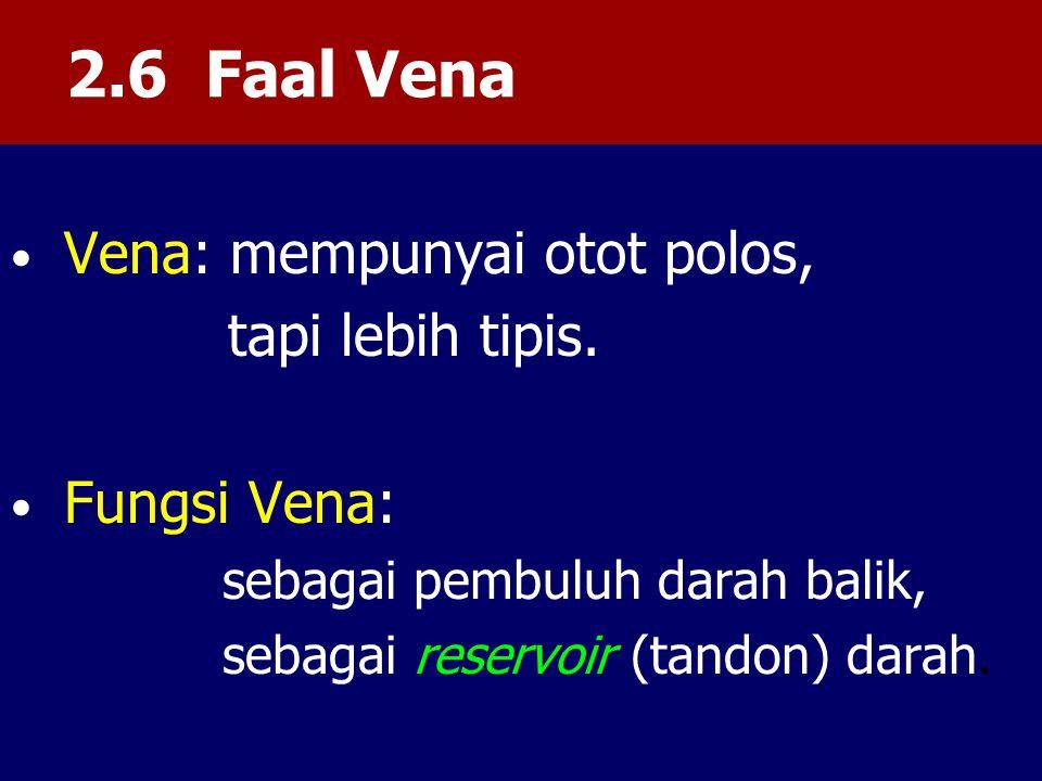 2.6 Faal Vena tapi lebih tipis. sebagai pembuluh darah balik,