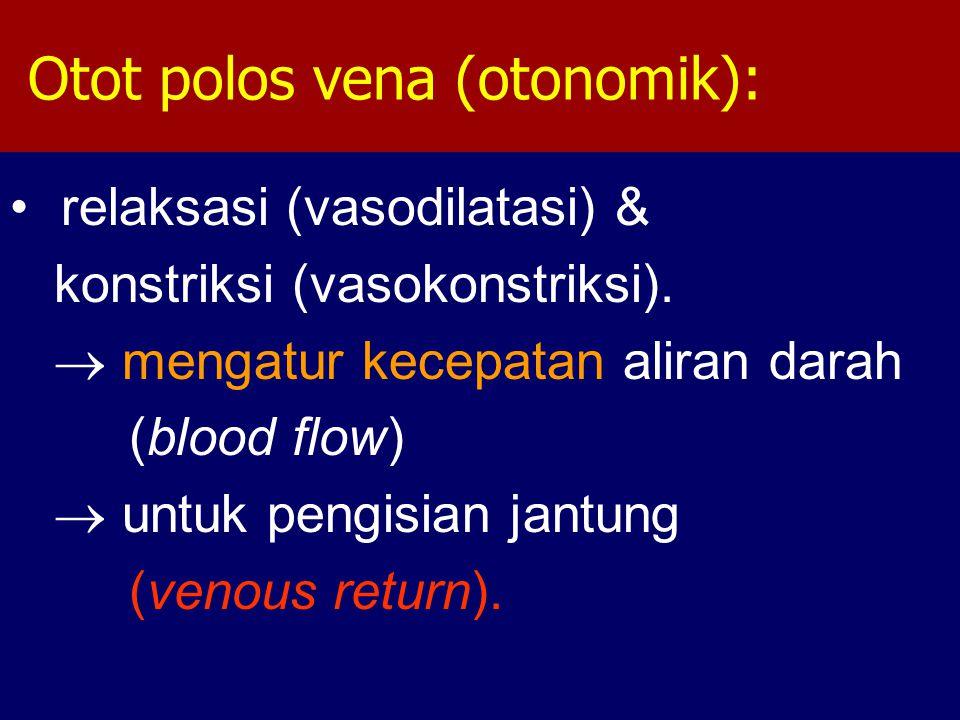 Otot polos vena (otonomik):