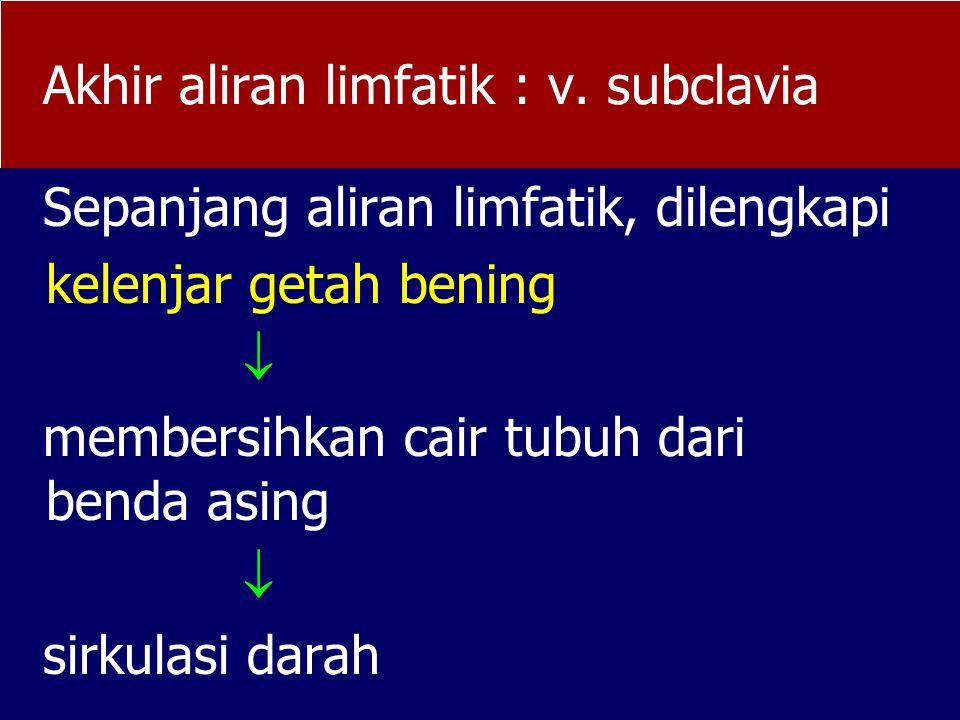 Akhir aliran limfatik : v. subclavia