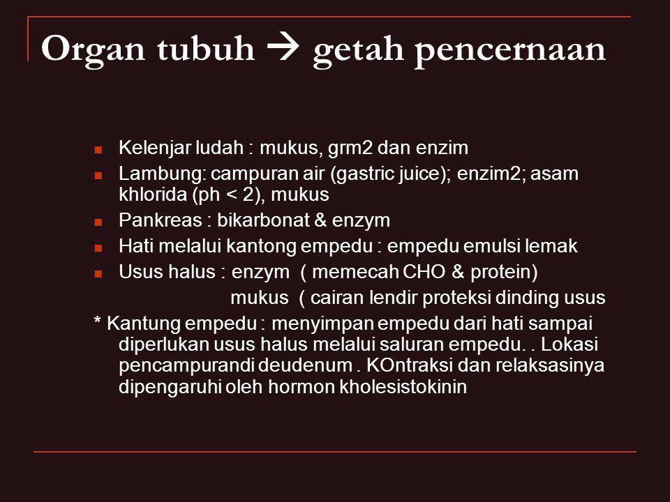 Organ tubuh  getah pencernaan