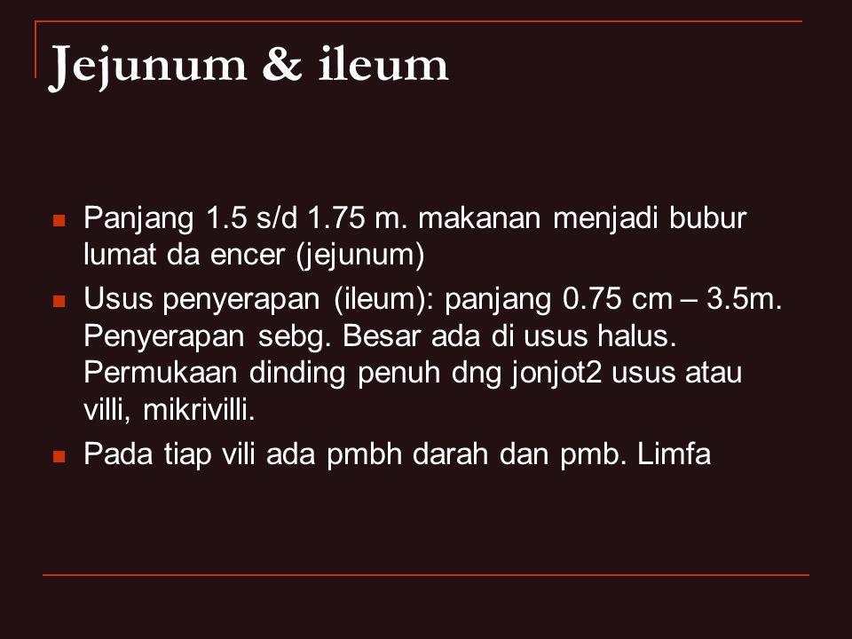 Jejunum & ileum Panjang 1.5 s/d 1.75 m. makanan menjadi bubur lumat da encer (jejunum)
