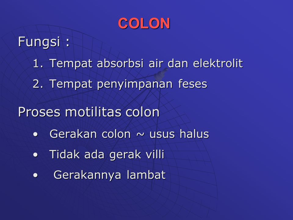 COLON Fungsi : Proses motilitas colon