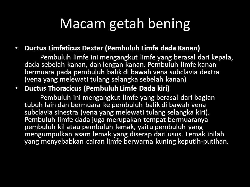 Macam getah bening Ductus Limfaticus Dexter (Pembuluh Limfe dada Kanan)