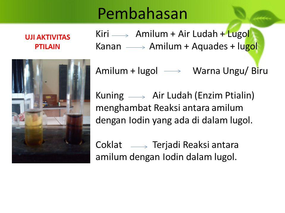 Pembahasan Kiri Amilum + Air Ludah + Lugol