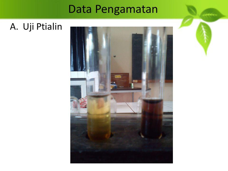 Data Pengamatan Uji Ptialin