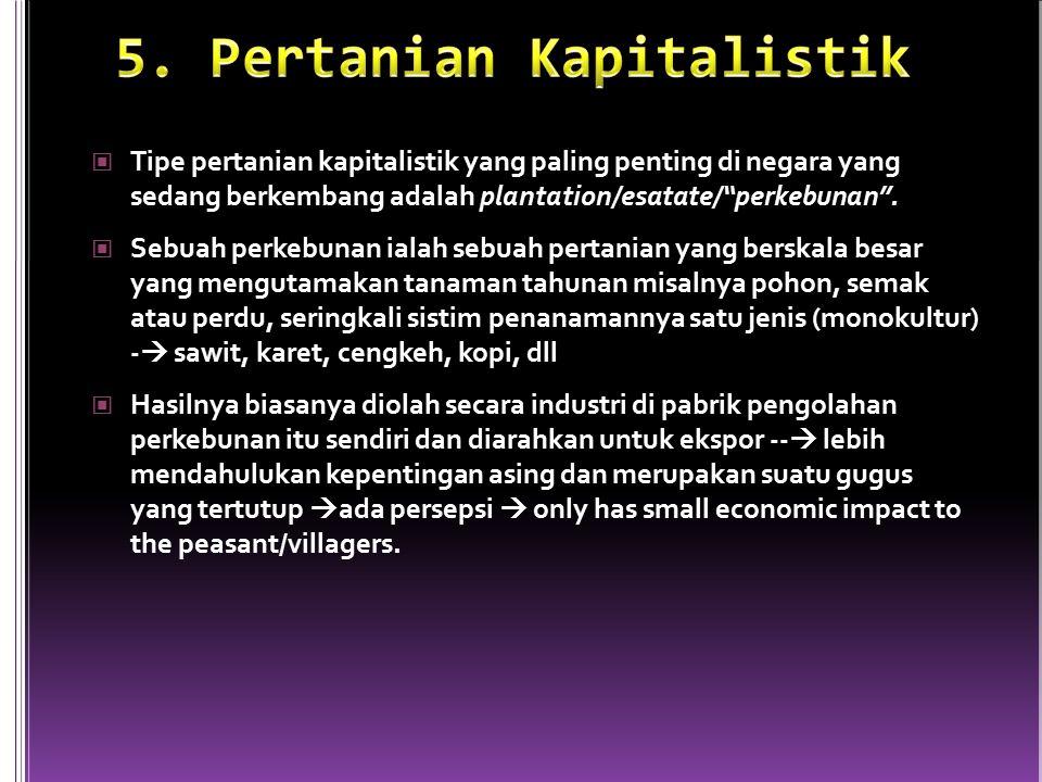 5. Pertanian Kapitalistik
