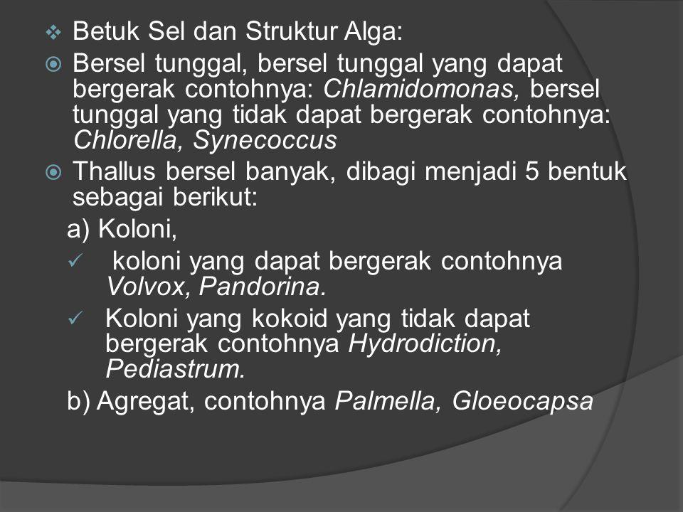 Betuk Sel dan Struktur Alga: