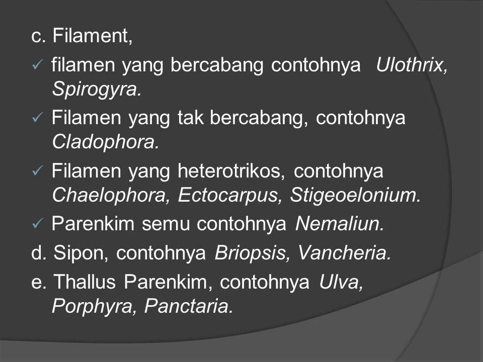 c. Filament, filamen yang bercabang contohnya Ulothrix, Spirogyra. Filamen yang tak bercabang, contohnya Cladophora.